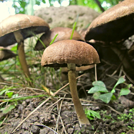Unknown Mushroom by Tina Dare - Nature Up Close Mushrooms & Fungi ( macro, fungi, nature, nature up close, nature close up, mushrooms )