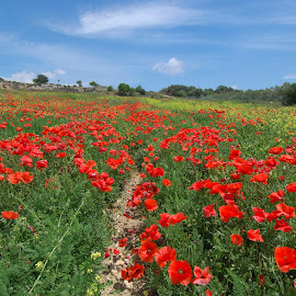 the hill of poppies by Carmelo Parisi - Landscapes Travel