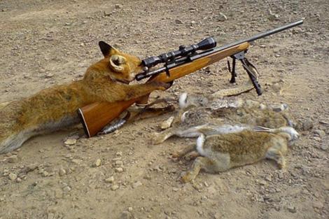 http://lh6.ggpht.com/crorts/SGztonNHhVI/AAAAAAAAAbU/dhYf4E68q9E/foxhunter.jpg