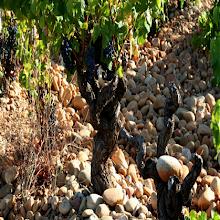 Rhône Valley Tasting