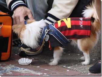 O Ronaldo Canino...