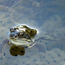 Happy Frog by Pat Somers - Animals Amphibians