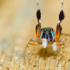Hi !!! by Sunny Joseph - Animals Insects & Spiders