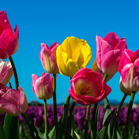 by Blanca Braun - Flowers Flower Gardens