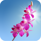 Orchids Live Wallpaper icon