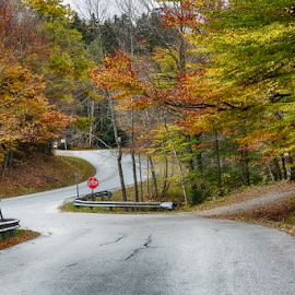 Autumn Highway by Nancy Merolle - Landscapes Forests ( color, autumn, foliage, fall, trees, forest, road, vermont, woods )