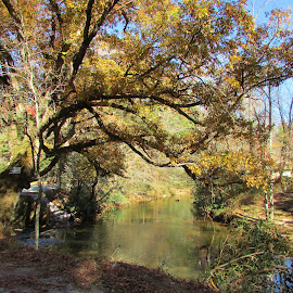 Stream Under The Yellow Tree by Terry Linton - Nature Up Close Trees & Bushes