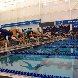 NCAA Women's Championships by Tyrell Heaton - Sports & Fitness Swimming