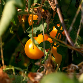 by Donald Darneille - Nature Up Close Gardens & Produce