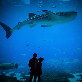 Deep Seas  by Lindsey Drakes - People Couples ( #aquarium, #couples, #whaleshark, #love, #underwater )