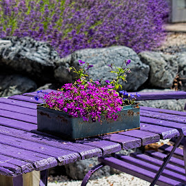 laveder everywhere by Vibeke Friis - Artistic Objects Furniture ( purple table with box of flower,  )