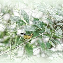 serenity by Denise Shreve - Abstract Macro