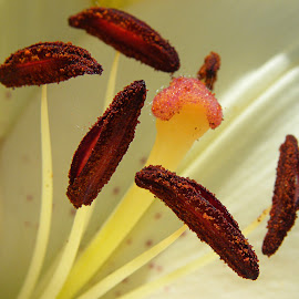 Carpel and Stamen by Sue Matsunaga - Novices Only Macro
