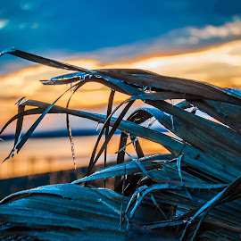 Ice on Palms by Jon Cody - Nature Up Close Other plants ( pace, winter, cold, sunset, florida, ice, floridatown park, winter storm, evening )