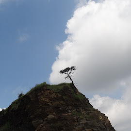 All alone! by Shubham Langote - Nature Up Close Trees & Bushes ( clouds, blue sky, mountain, tree, rocks )