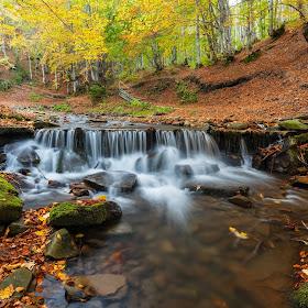 Pylypets. Autumn Motives.jpg