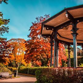 Autumn Bandstand by Stuart Lilley - City,  Street & Park  City Parks ( bandstand, autum, park, trees, colours,  )