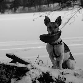 by Anrijs Slišāns - Animals - Dogs Portraits