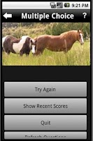 Screenshot of Pony Lessons Quiz