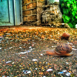 Snails Came to Visit by Nachau Kirwan - Novices Only Macro ( snails, floor, hot, door, dirt, rain,  )