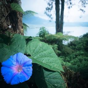 Buyan by Putu Purnawan - Nature Up Close Other plants ( bali, lake, flower )