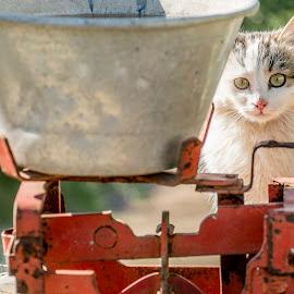 by Mitat Özkan - Animals - Cats Kittens