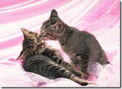 beijo-gatos