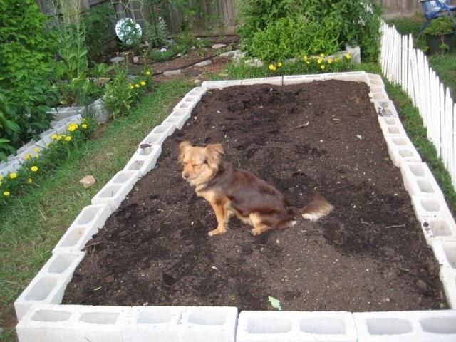 Fertilizing Raised Bed Vegetable Garden