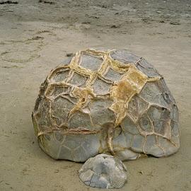 Moeraki Boulders by Marion Metz - Nature Up Close Rock & Stone ( ocean, coastline, moeraki boulders, rocks, new zealand )