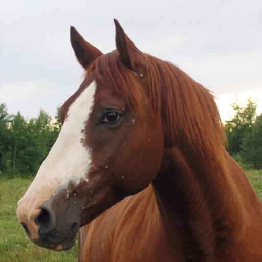 Horses Photo Book LOGO-APP點子