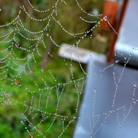 Natural Pearls by Kevin Dietze - Nature Up Close Webs