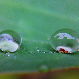 2 of Us by Sengkiu Pasaribu - Nature Up Close Natural Waterdrops