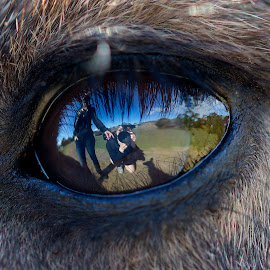 Windows & mirrors by Wade Tregaskis - People Couples ( macro, reflection, reflected, wallaby, close up, close-up, closeup, portrait, eyes, eye )