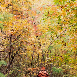 Four Wheeling In The Ozarks by Brenda Hooper - Landscapes Forests ( ozark mountains, four wheeler, autumn, dirt path, golden, arkansas )