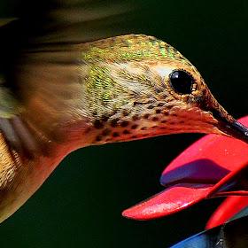 Hungry Bird copy.jpg