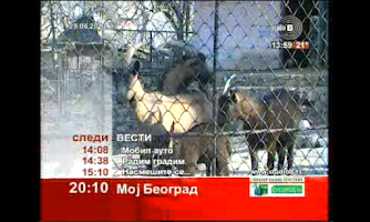 Screenshot of Srpska Televizija