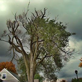 A Storm On The Horizon by Yvonne Collins - News & Events Weather & Storms