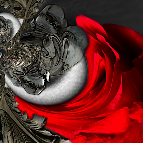 EMBRACE by Carmen Velcic - Digital Art Abstract ( abstract, red, silver, roses, flowers, digital )