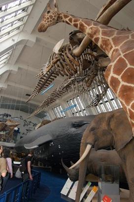 Big mammals