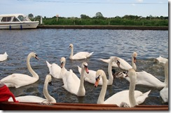 Broads May 08 51
