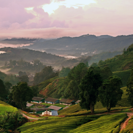 201208200704 Tea Valley by Steven De Siow - Landscapes Mountains & Hills ( cameron highland, landscape photography, malaysia, scenery, landscape )