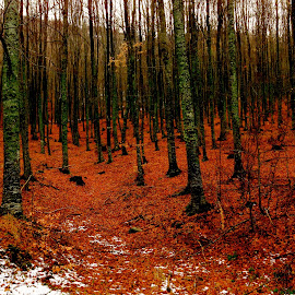 Naousa red by Harris Kalofonos - Landscapes Forests