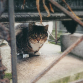 Cemetery cat, Paris by Lori Rider - Animals - Cats Portraits ( paris, cat, frame, metal, cemetery,  )