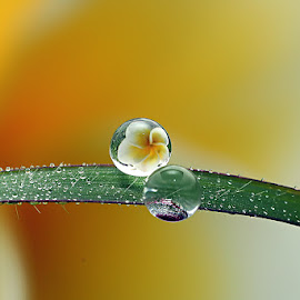 :: DIFFERENT :: by Dedy Haryanto - Nature Up Close Natural Waterdrops
