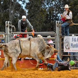 Pay Back by Peter Brooks - Sports & Fitness Rodeo/Bull Riding ( rodeo, falling off, bullriding )