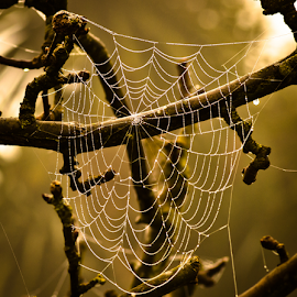 by Darrell Raw - Nature Up Close Webs
