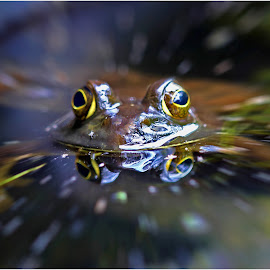 by Dennis Ba - Animals Amphibians