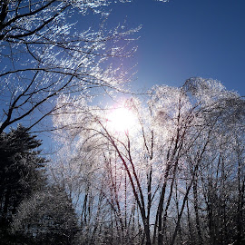 Wintry Ice on the Trees by Sean M. Chase - Landscapes Weather ( sky, winter, maine, ice, weather, trees, landscape )