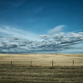 Fields of Gold by Andrew Ng - Landscapes Prairies, Meadows & Fields ( farm, golden fields, canada, alberta, prairies, highway 2 )