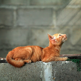 waiting by Kanda Ridho - Animals - Cats Playing ( #inhil_community )